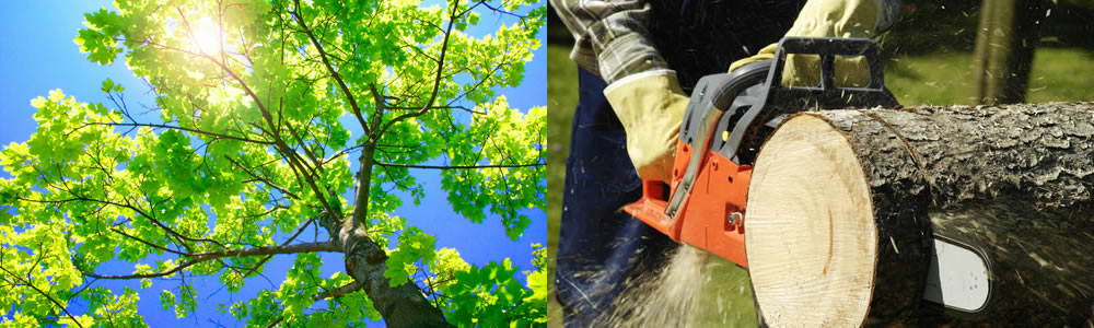 Tree Services Leawood